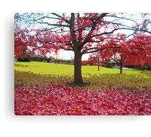 Fall tree Canvas Print