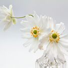 White Anemones in a Glass Bottle by Ann Garrett