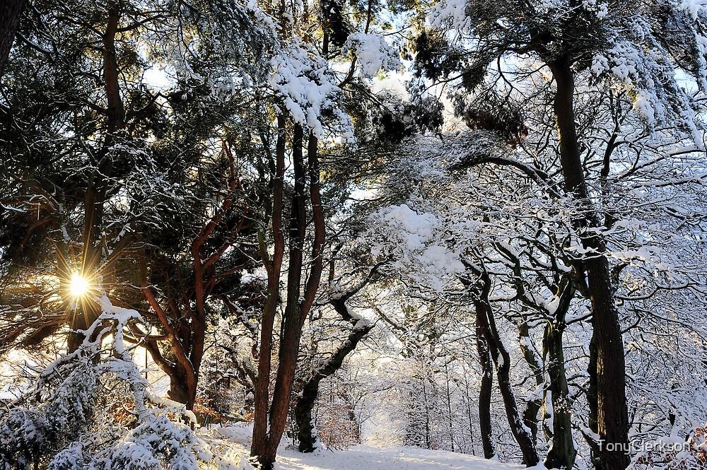 Icy Beauty by TonyClerkson