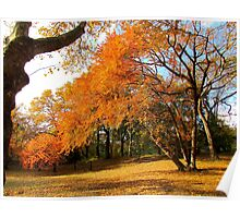 Autumn in New York, Central Park Poster