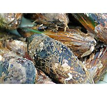 Green Lipped Mussels Photographic Print