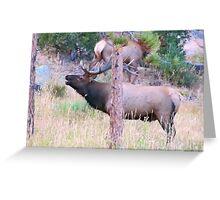 Bull Elk Bugling Greeting Card