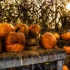 Autumn Pumpkins by Mari  Wirta