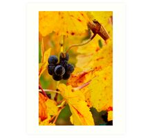 Grapes and Gold Art Print