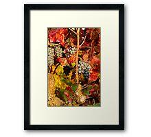 Vine in Color Framed Print