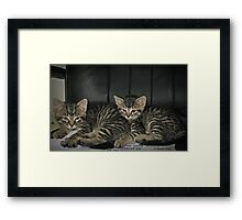 Cute CounterpartS Framed Print