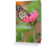A Butterflies Delight Greeting Card