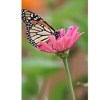 A Butterflies Delight Photographic Print