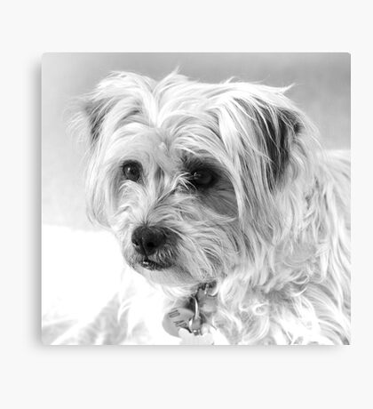 Milo movie star photo shoot Canvas Print