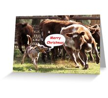 Koolie rounding up cattle Christmas Card Greeting Card