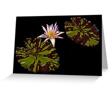 Purple Waterlily, two leaves Greeting Card