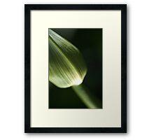 Agapanthus Green Framed Print