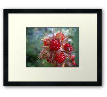 Wild Raspberries Framed Print