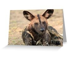The alpha male of the pack Greeting Card