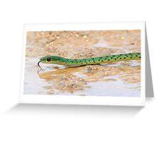 Boomslang vs Spotted bush snake Greeting Card