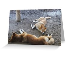 Dingoes (Nap time) at Healesville Sanctuary Greeting Card