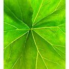 iphone case - morning leaf by ozyardiansyah