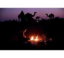 Camel Sunset Photographic Print