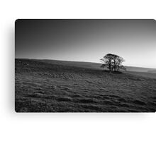 Henside Copse 02 - Yorkshire Dales, UK Canvas Print