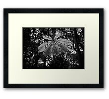 Leaf in the Sun Framed Print