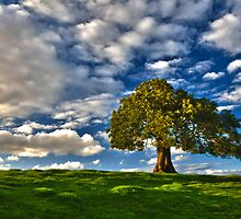 Lonely Tree by Norman Dodds