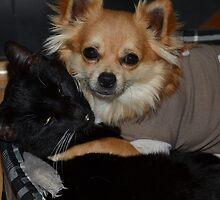 Ziggy & Lilo by JayBeePhoto