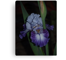 Iris - Hey Dreamer Canvas Print