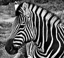 Black and White by Darren Clarke