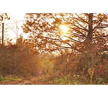 Warm Touch  Photographic Print
