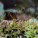Forest Floor Magic by Nadine Staaf