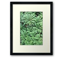Forest of ferns Framed Print