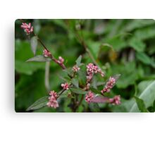 Tiny Pink Buds Canvas Print