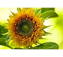 Eyes of the Sun...On 2 Featured Works Photographic Print