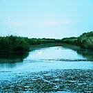 Wide landscape with two white swans in the Danube Delta, Romania by queensoft