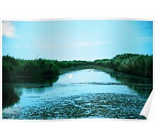 Wide landscape with two white swans in the Danube Delta, Romania Poster