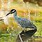 Best WILD Birds of the EAST COAST $$Voucher Challenge!