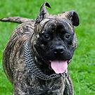 The dizzy brindle..... by shellfish
