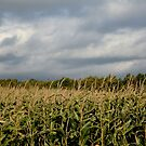 Windy Cloudy Corn Field of PEI by Nadine Staaf