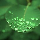 Small water pearls on a green leaf macro shot by queensoft