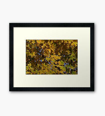 Color Change Framed Print