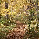 Covered Trail by Dean Mucha