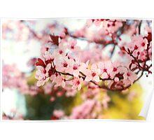 Plum Flowers Blossom Poster