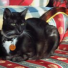 Smokey on the chaise lounge by Marjorie Wallace