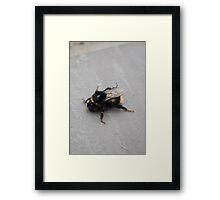 Humble Bumble Framed Print