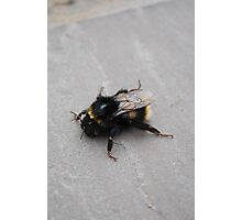 Humble Bumble Photographic Print