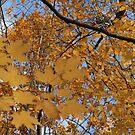 Leaves On Leaves by Dean Mucha