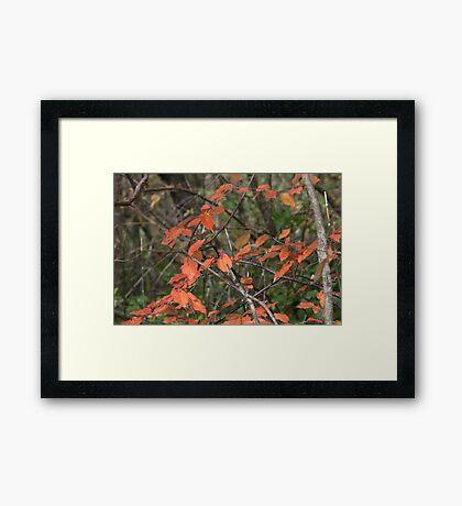 Rusty Leaves Framed Print