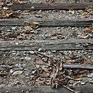 Three Woods by Dean Mucha