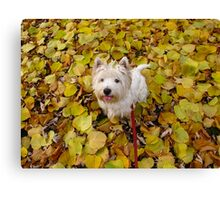 Licking his lips for Fall Canvas Print