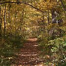 The Shaded Trail by Dean Mucha